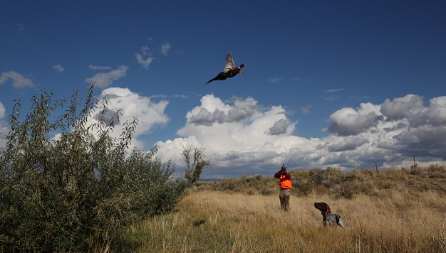 pheasant hunting wyoming